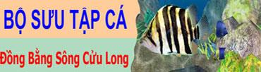 Bộ Sưu Tập Cá Vùng Đồng Bằng Sông Cửu Long